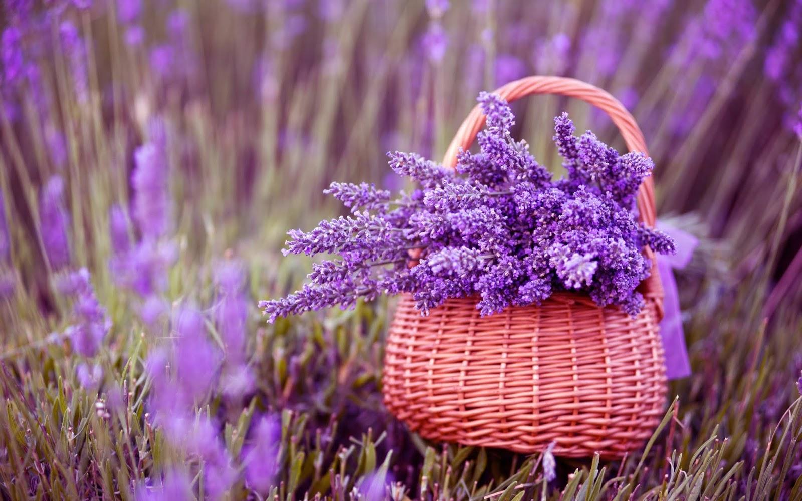 Hình nền giỏ hoa đẹp
