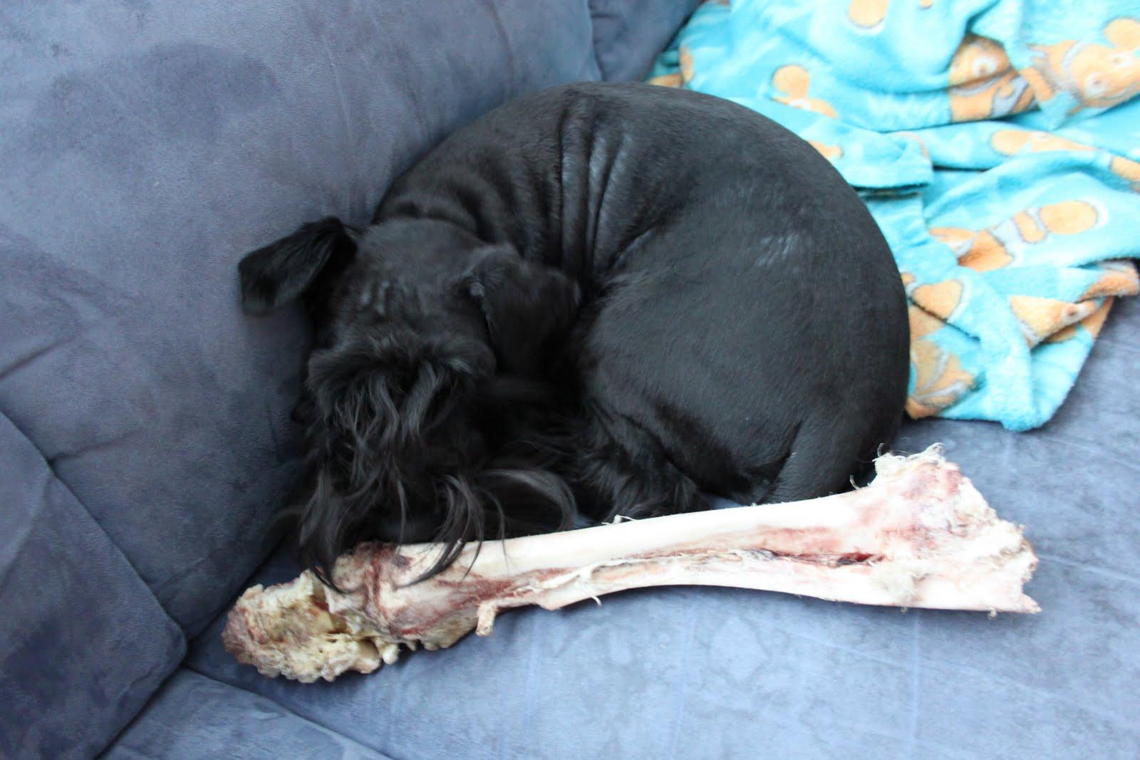 Kansanparantajan Perillinen: Koiran hampaiden pesu...