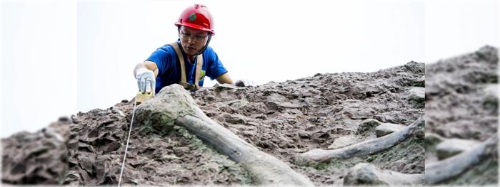 a maior parede de fósseis de dinossauros do mundo na China