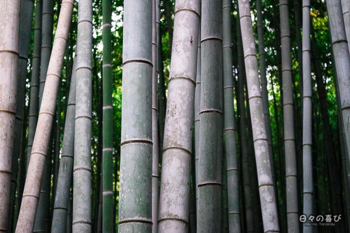 troncs de bambous, bambouseraie d'Arashiyama, Kyoto