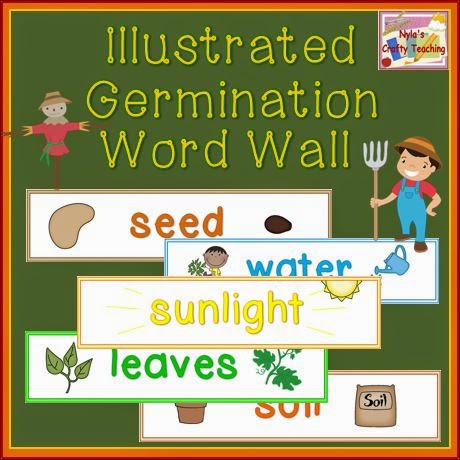 Germination-Word-Wall-can-be-used-to-sequence-steps-in-Germination