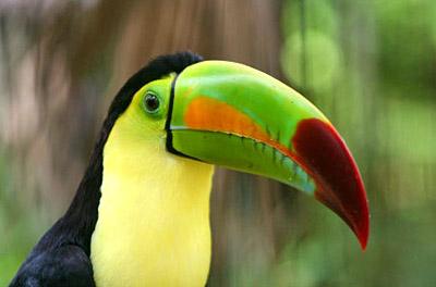 Liangaoyin - Amazon rainforest animals wallpaper ...