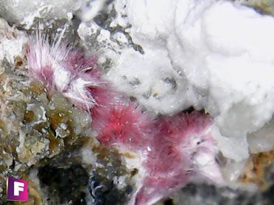 eritrina-mineral-bajo-el-microscopio