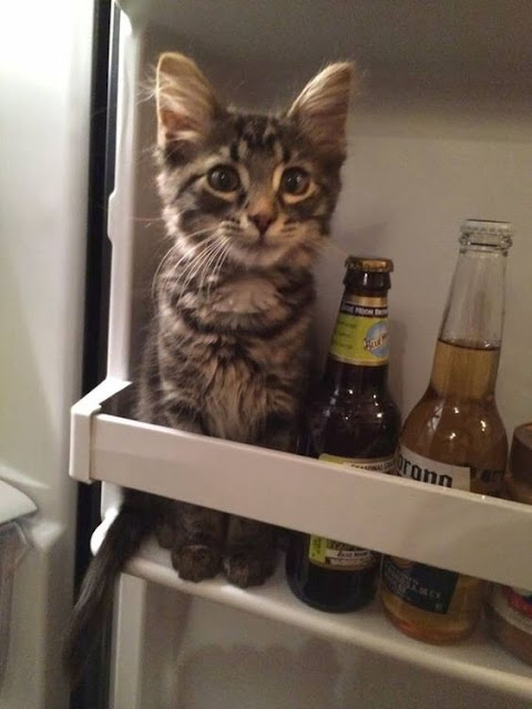 Fridge cat picture