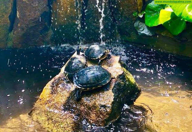 Desaparecen las tortugas del estanque del Chipi Chipi