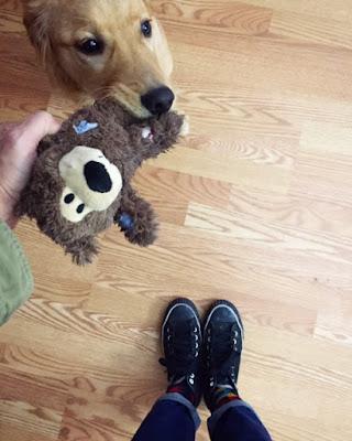 Ember the Golden Retriever puppy