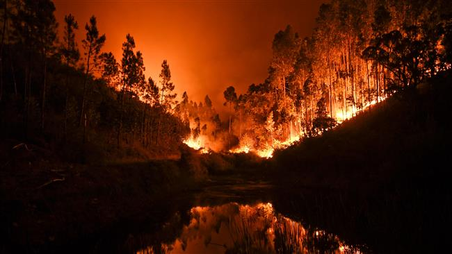 Raging forest fires kill at least 62 in Portugal