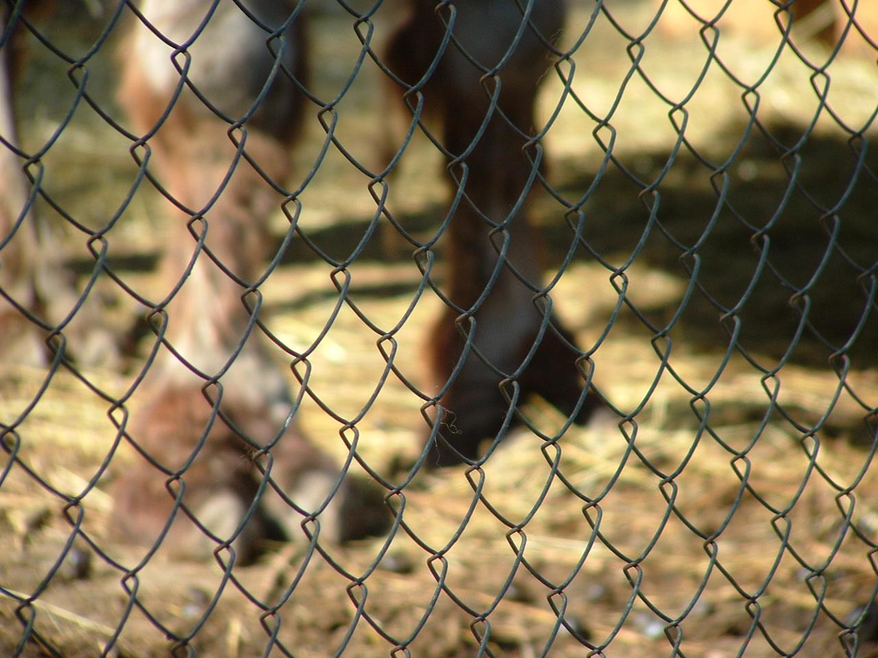 Worlds largest camel toe