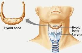 Kojutsukan Fractured Hyoid Bone And Martial Arts Practice