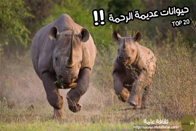 اخطر-حيوان-في-العالم