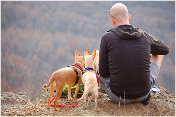 Things to Know About Traveling With Pets