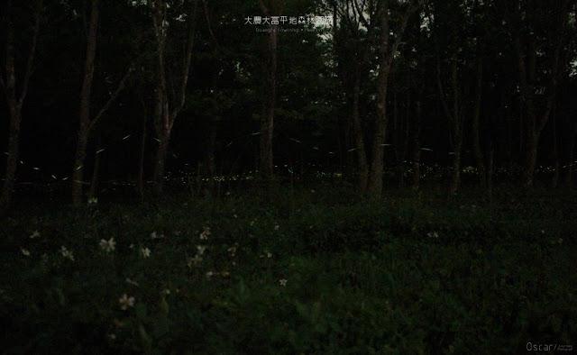 大農大富平地森林園區-3