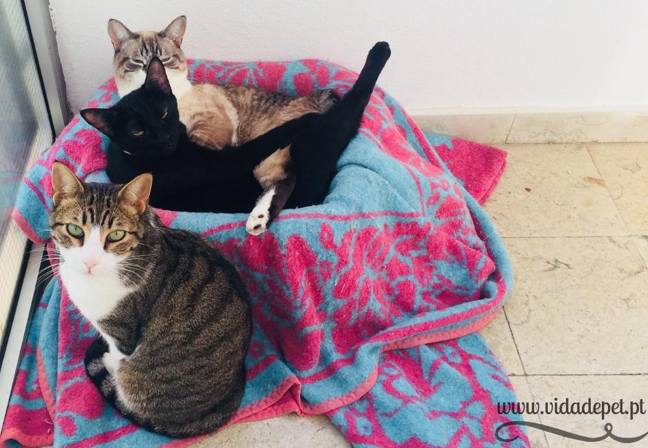 Xavi + gatos voadores+ blogue de animais de estimação + portugal + português + vida de pet + pedro e telma + partilha de histórias reais (3)