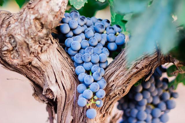 rituali-di-bellezza-a-base-uva