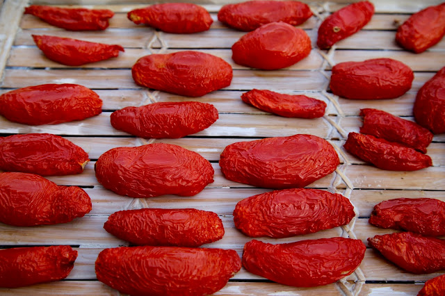 sun dried tomatoes in the south of FRance
