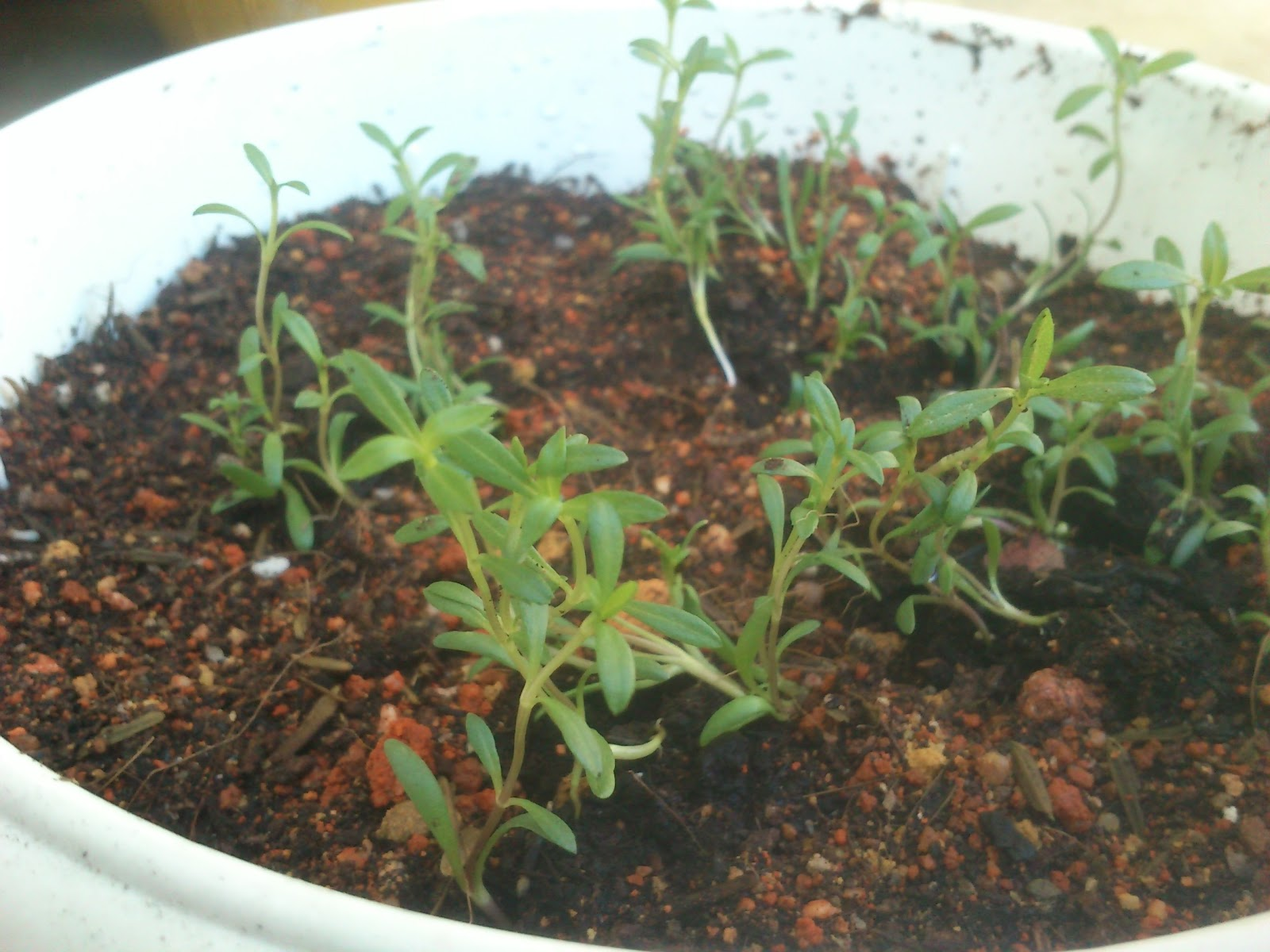 Herb Enthusiast: February 2012
