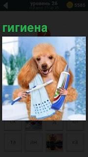 Перед зеркалом стоит собака с зубной пастой, щеткой и полотенце, которая совершает гигиену