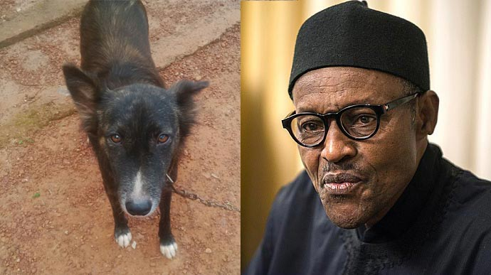 "100 barristers lined up to defend man who named dog ""Buhari"""
