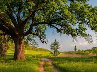 Fungsi Pohon Di Pinggir Jalan