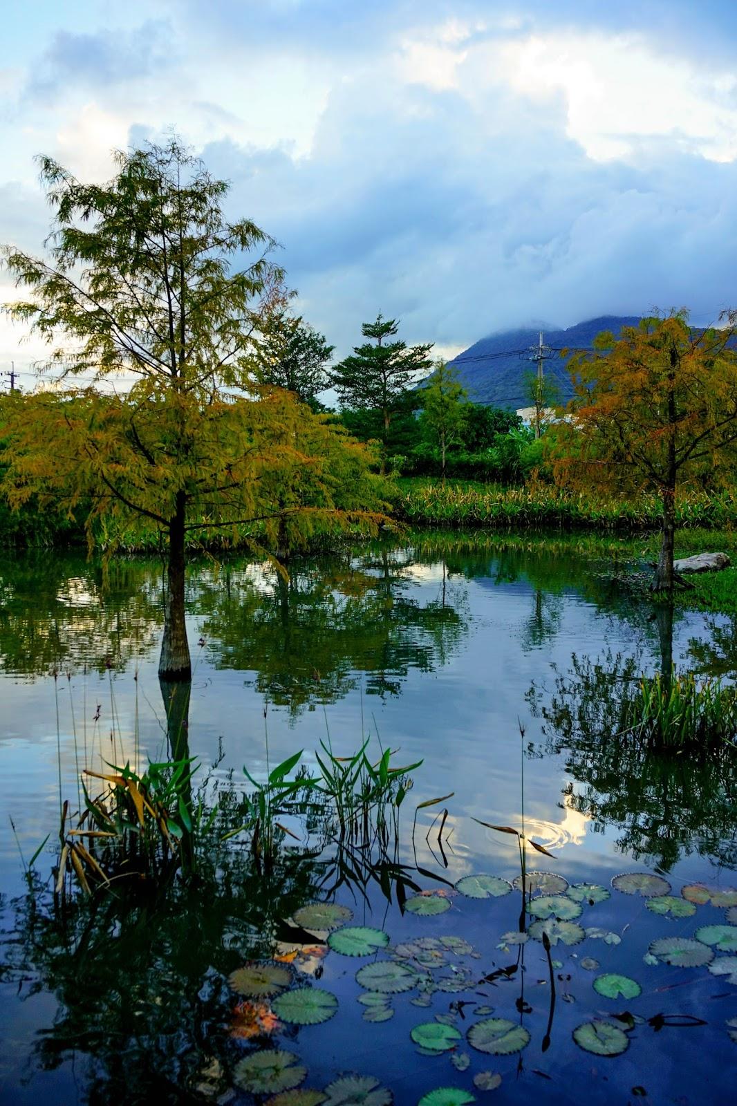 beautyanxiety.com-beautyanxiety.com-cultural-park-forest-DSC08851.jpg