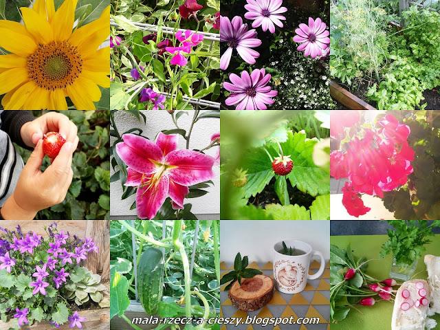 Lato w moim przymieszkaniowym 20-metrowym ogródku