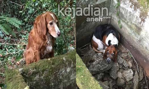 Anjing Ini Tak Makan Minum Selama 7 Hari Demi Menjaga Sahabatnya
