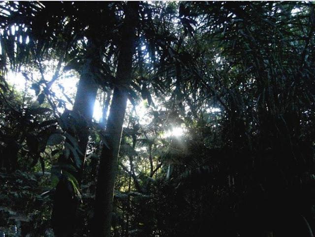 Bosque dos Buritís-Goiânia_Centro Oeste do Brasil_num fim de tarde o sol entre frestas