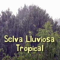 selva,lluviosa,tropical