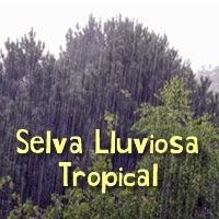 selva,lluviosa,tropical