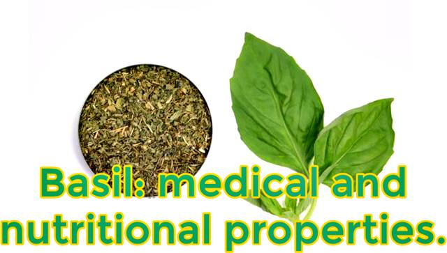 All the medical and therapeutic properties of Basil
