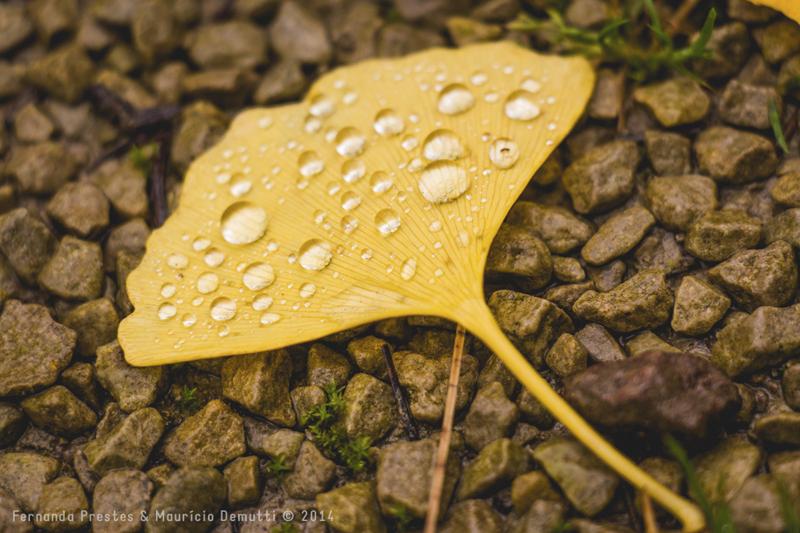 folha amarela com gotas de chuva
