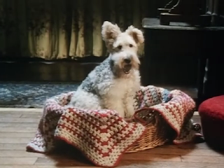 Bob, wire-haired terrier dog in Agatha Christie's Poirot Dumb Witness