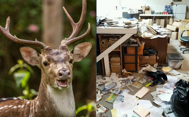 Deer Breaks into Minnesota Deer Fur Company, Head-Butts Owner, Escapes