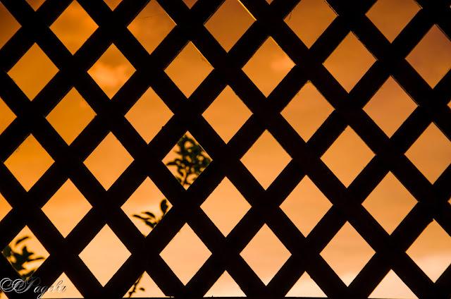 Залез-зад-решетката-Sunset-behind-the-net