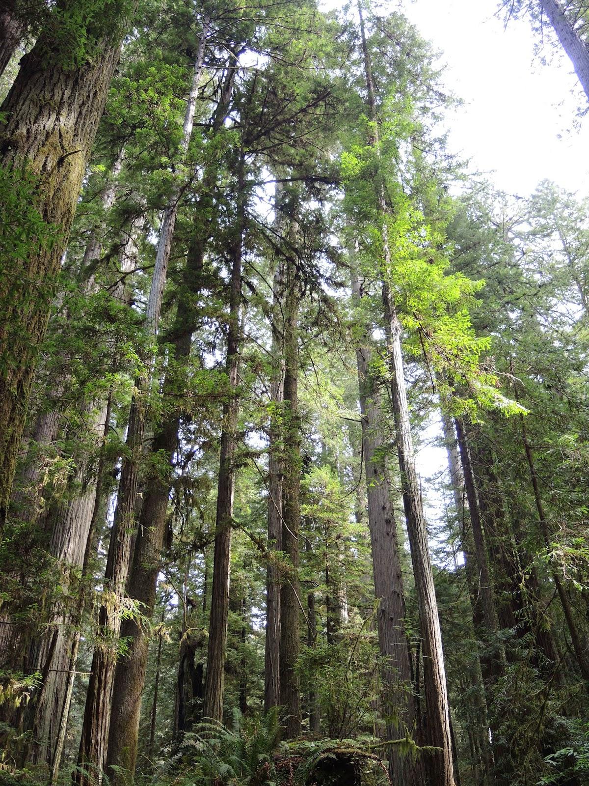 Redwood national park 5