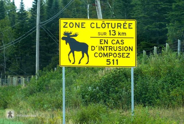 Nicht weit hinter Quebec City beginnt die Landschaft abwechslungreich zu werden. Weite kanadische Waelder erstrecken sich entlang der Strasse und die grossen gelben moose-warning signs haeufen sich an der Fahrbahn ...