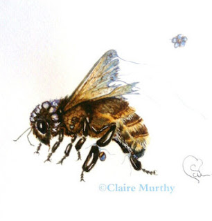 Fairy Bee Illustration Sketch