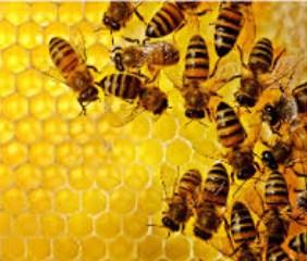 Arti Mimpi Lebah Madu