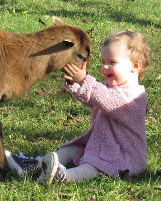 mouton cameroun affectueux enfants proche