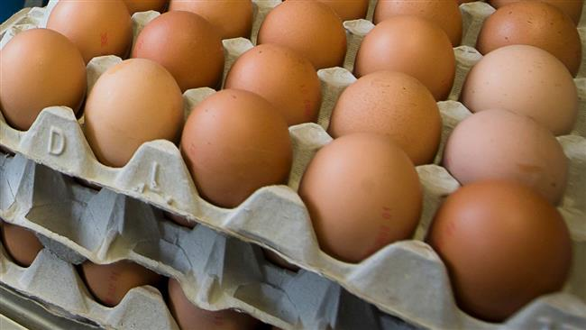 Dutch and Belgian police investigators search for eggs contaminated with fipronil