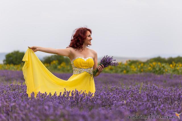 cánh đồng hoa oải hương đẹp nhất thế giới 17