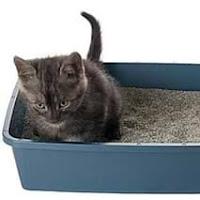 Pasir silika kucing