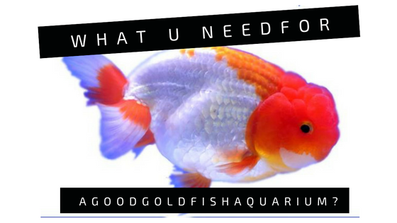 Aquarium fish index what you need for a good goldfish for What do i need for a fish tank