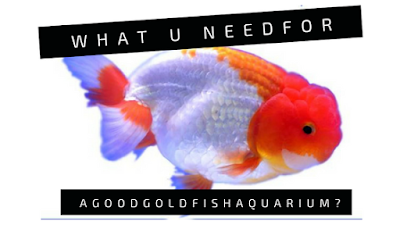 aquarium-filtration-goldfish