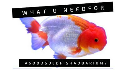 aquarium-filtration-goldfish