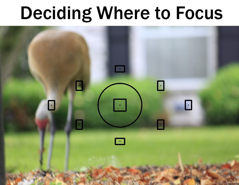 Deciding Where To Focus | Boost Your Photography