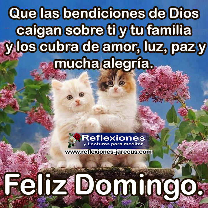 Que las bendiciones de Dios caigan sobre ti y tu familia y los cubra de amor, luz, paz y mucha alegría. Feliz Domingo