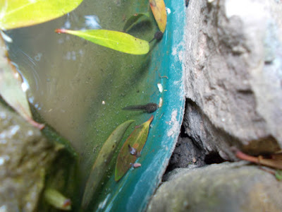 Tadpoles in the pond Change your garden - what can you add this year? Green Fingered Blog