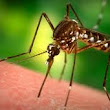 "Malaria Vaccine ""Discovered"" 3 Weeks After African Meeting in Nigeria Adopts DDT Malaria Eradication"