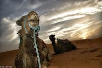 rutas, viajes, marruecos, desierto